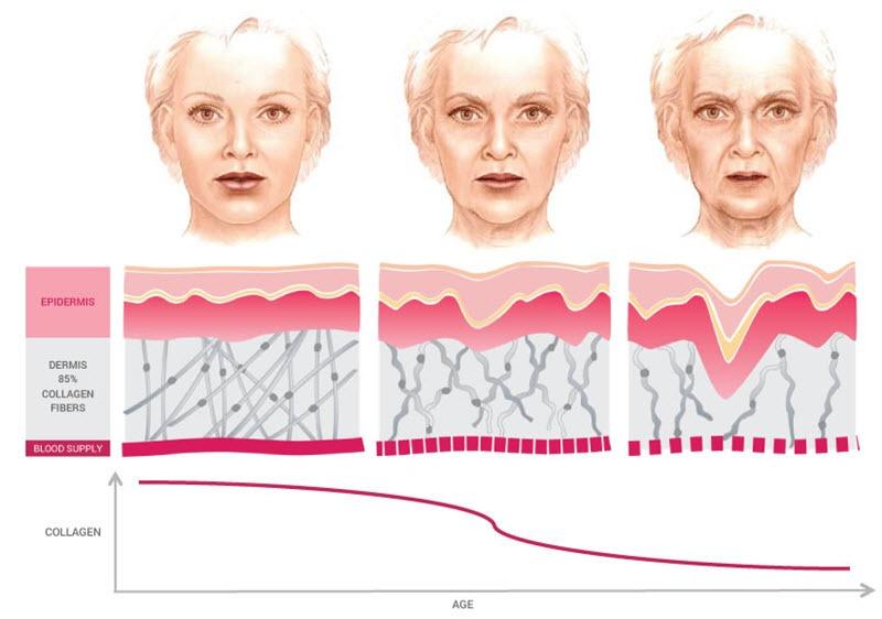 Collagen có tác dụng gì cho da mặt