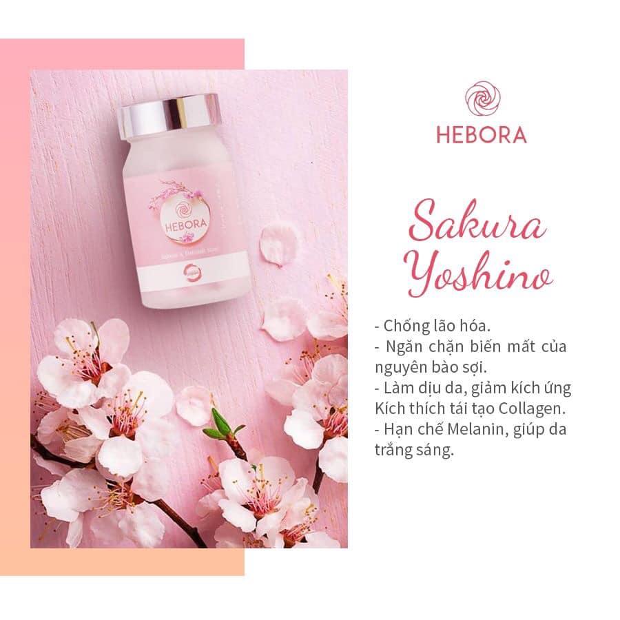 Hoa anh đào - Thành phần viên uống Hebora