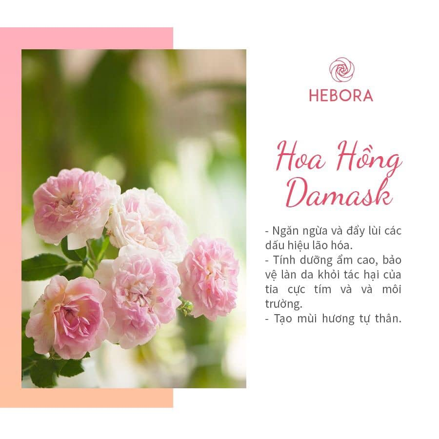 Hoa hồng Damask - Thành phần viên uống Hebora