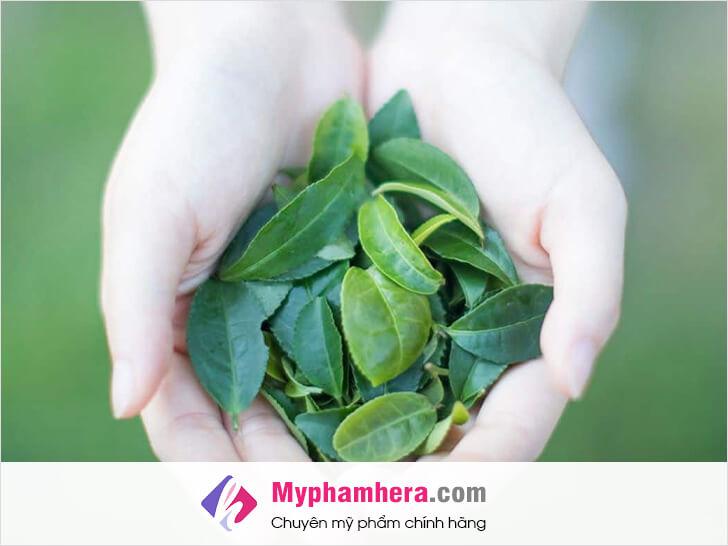 cách khử mùi hôi cơ thể bằng trà xanh mỹ phẩm hera